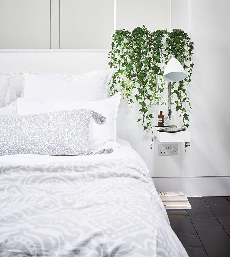 Cây thường xuân đặt trong phòng ngủ