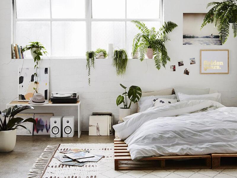 Lưu ý đặt cây cảnh trong phòng ngủ