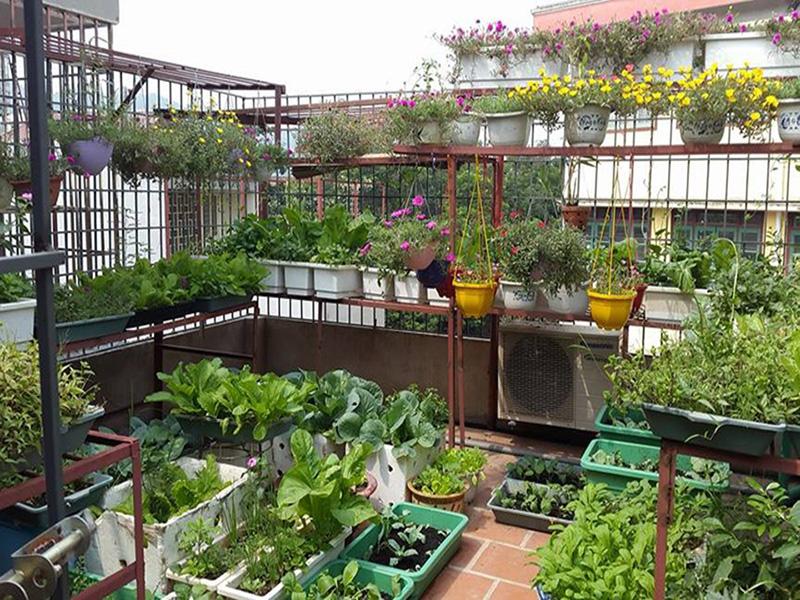 sân thượng sẽ trở thành vườn rau sạch cung cấp cho cả gia đình