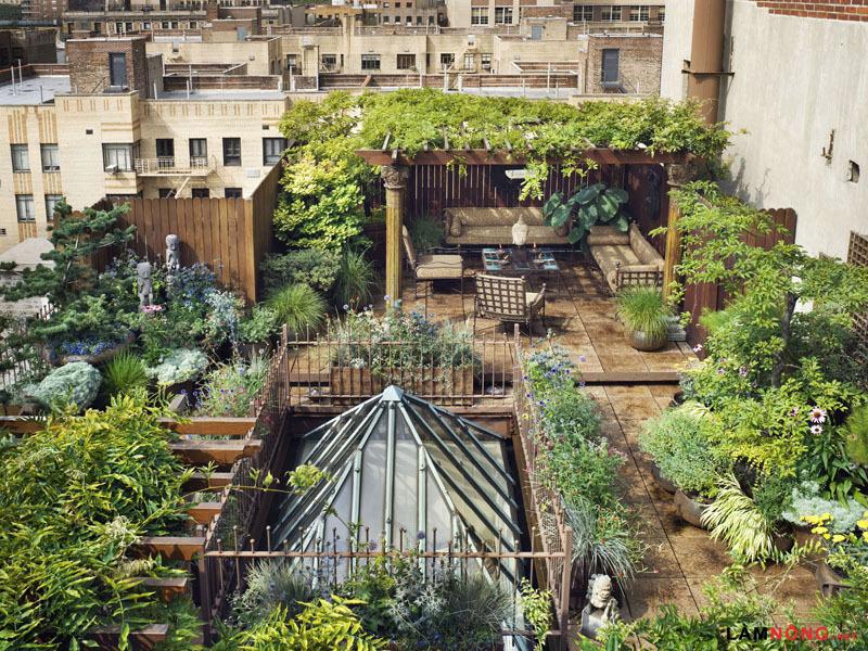 vườn rau xanh mát trên sân thượng phục vụ bữa ăn gia đình