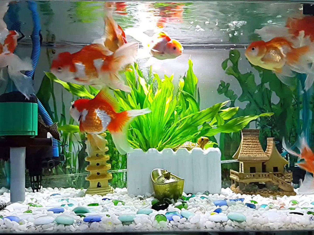 Những điều cần tránh khi đặt bể cá trong nhà